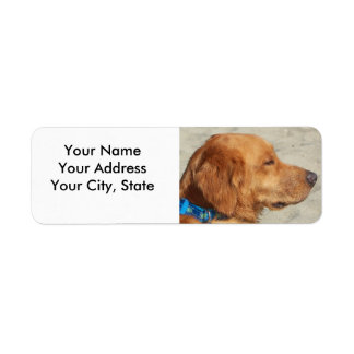 Golden Retriever Beach Dog Return Address Label