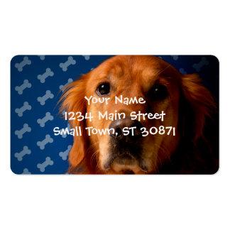 Golden Retriever blue bone background Pack Of Standard Business Cards