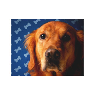Golden Retriever blue bone background Gallery Wrapped Canvas