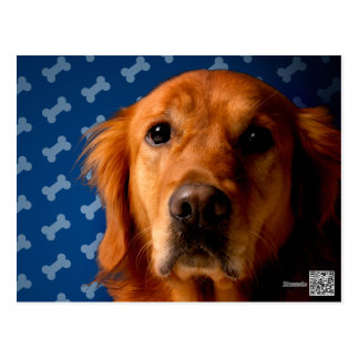 Golden Retriever blue bone background Postcard