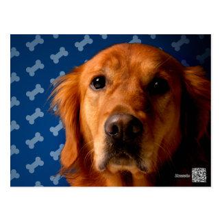 Golden Retriever blue bone background Postcard