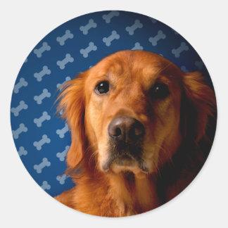 Golden Retriever blue bone background Round Sticker