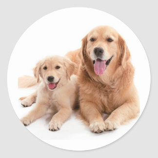 Golden Retriever Buddies Classic Round Sticker