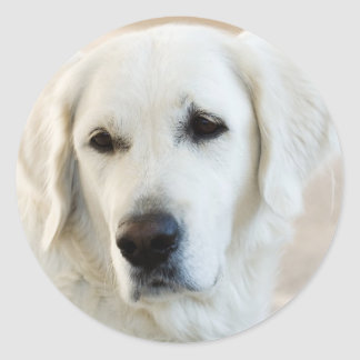 Golden Retriever Classic Round Sticker