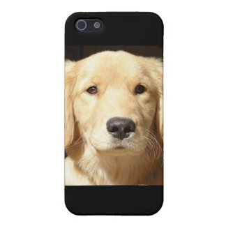 Golden Retriever Closeup iPhone 5/5S Cases