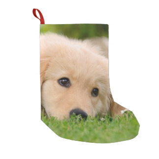 Golden Retriever Cute Puppy Dreaming -Santa mantle Small Christmas Stocking