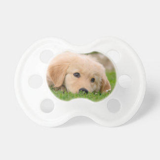 Golden Retriever Cute Puppy Dreams Dog Head Photo Dummy