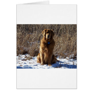 Golden Retriever Dog Card