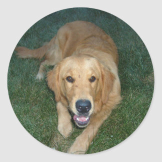Golden Retriever dog Classic Round Sticker