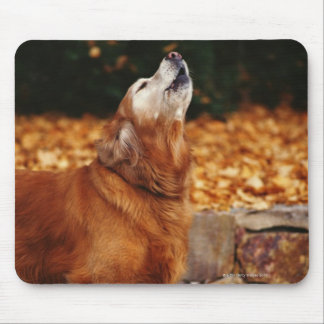 Golden retriever dog howling on path mouse pad