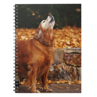 Golden retriever dog howling on path notebook