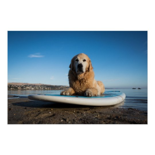 Golden Retriever Dog Laying On A Paddle Board