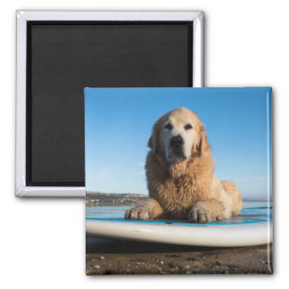 Golden Retriever Dog  Laying On A Paddle Board Square Magnet