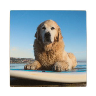 Golden Retriever Dog  Laying On A Paddle Board Wood Coaster