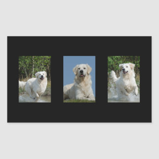 Golden Retriever dog lovers rectangle stickers