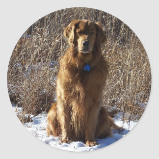 Golden Retriever Dog Round Sticker