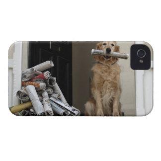 Golden retriever dog sitting at front door Case-Mate iPhone 4 cases