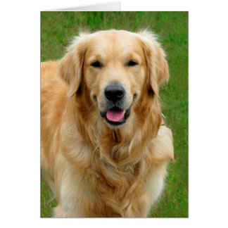 Golden Retriever—Dog Sympathy Card