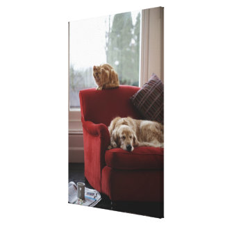 Golden retriever dog with ginger tabby cat canvas print