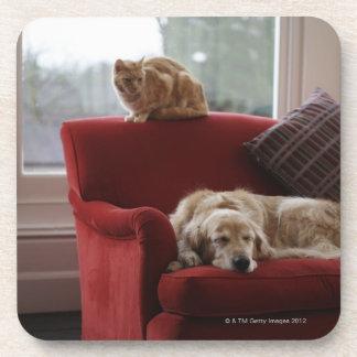 Golden retriever dog with ginger tabby cat coaster