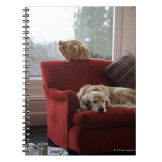 Golden retriever dog with ginger tabby cat notebook