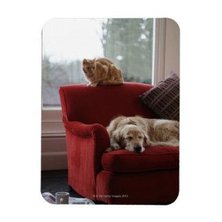 Golden retriever dog with ginger tabby cat rectangular photo magnet