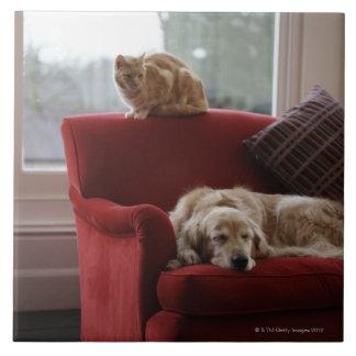 Golden retriever dog with ginger tabby cat tile