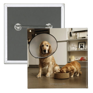 Golden retriever dog with medical collar sitting 15 cm square badge