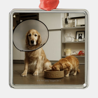 Golden retriever dog with medical collar sitting christmas ornament