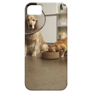 Golden retriever dog with medical collar sitting iPhone 5 cover