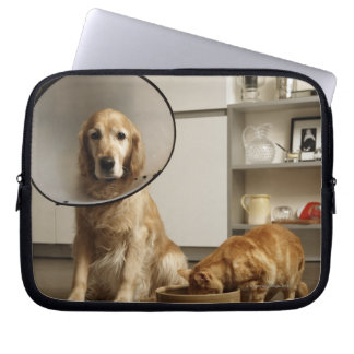 Golden retriever dog with medical collar sitting laptop sleeve