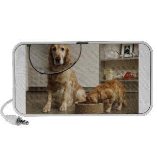 Golden retriever dog with medical collar sitting mini speakers