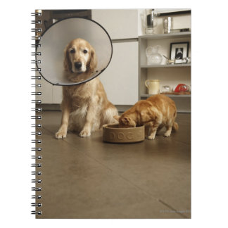 Golden retriever dog with medical collar sitting spiral notebook