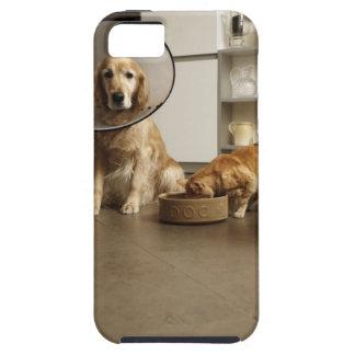 Golden retriever dog with medical collar sitting tough iPhone 5 case