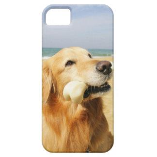 Golden Retriever eating bone Case For The iPhone 5