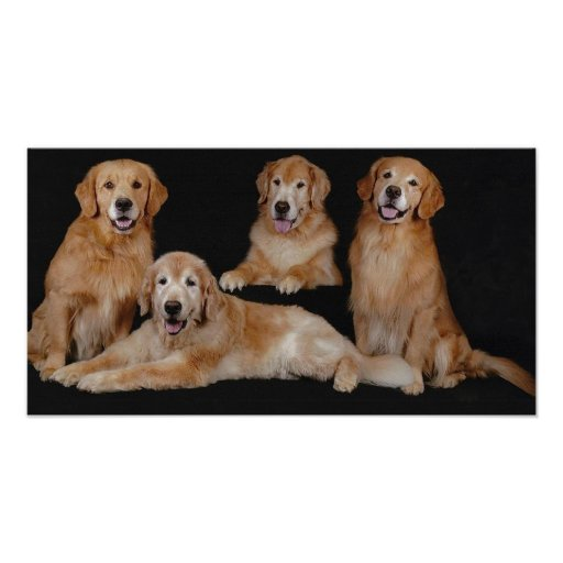 Golden Retriever Family Print
