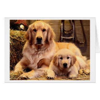 Golden Retriever Father s Day Card
