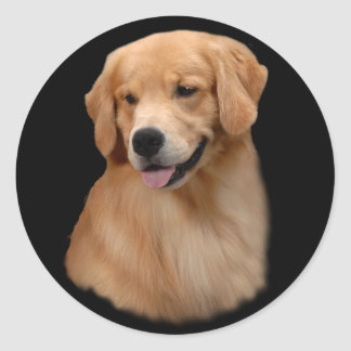 Golden Retriever Frisco Large Sticker