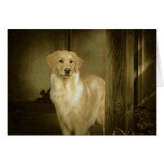 Golden Retriever Greeting Card Lady In Waiting