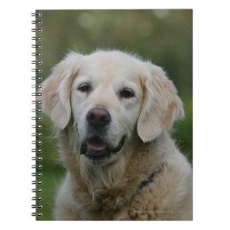 Golden Retriever Headshot 2 Note Books