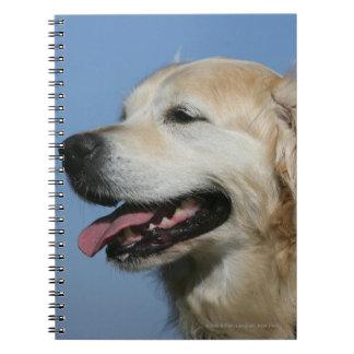 Golden Retriever Headshot 4 Notebooks