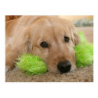 Golden Retriever Heard You Were Sick Get Well Postcard