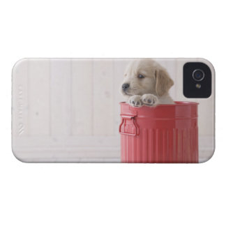 Golden Retriever in Bucket iPhone 4 Case-Mate Cases
