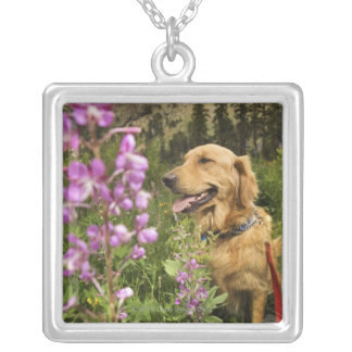 Golden retriever in field silver plated necklace