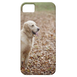 golden retriever in park in autumn case for the iPhone 5