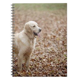 golden retriever in park in autumn note books