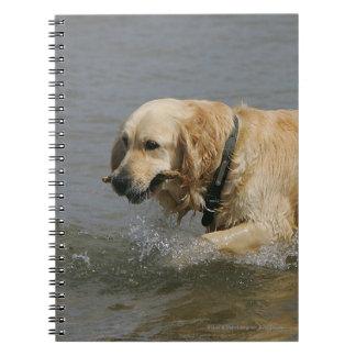 Golden Retriever in Water Notebook