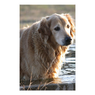 Golden Retriever in Water Stationery Paper