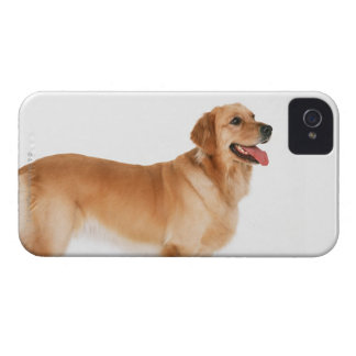 Golden Retriever iPhone 4 Case