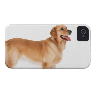 Golden Retriever iPhone 4 Cases